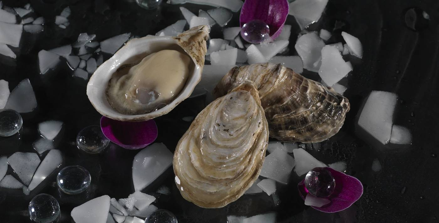 Premium Kusshi Oysters