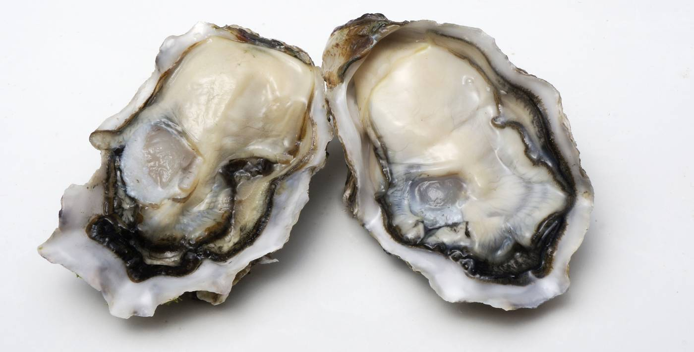 Plump and juicy specialty oysters